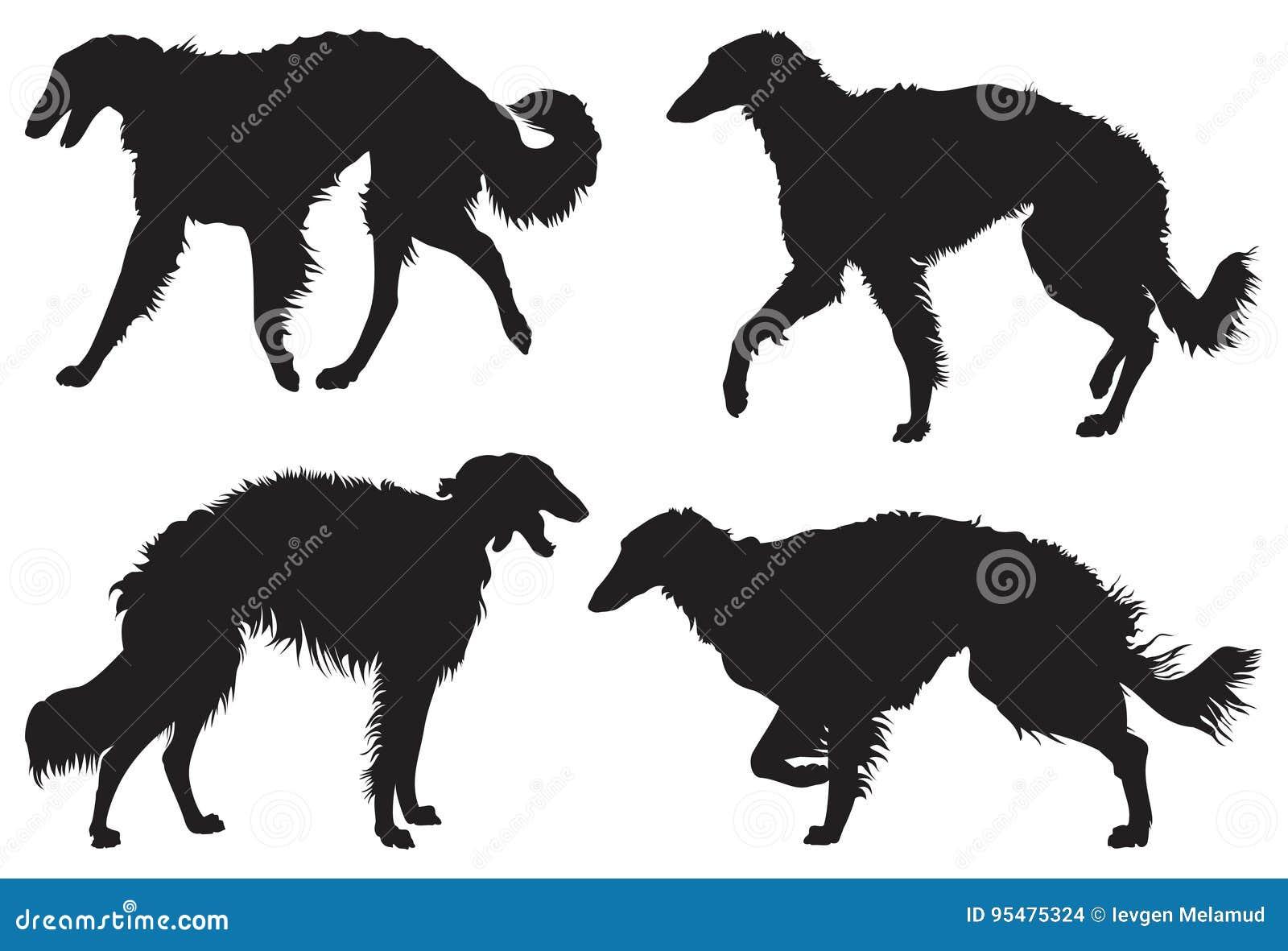 Borzoi † Rosyjskie Wolfhound psa trakenu sylwetki