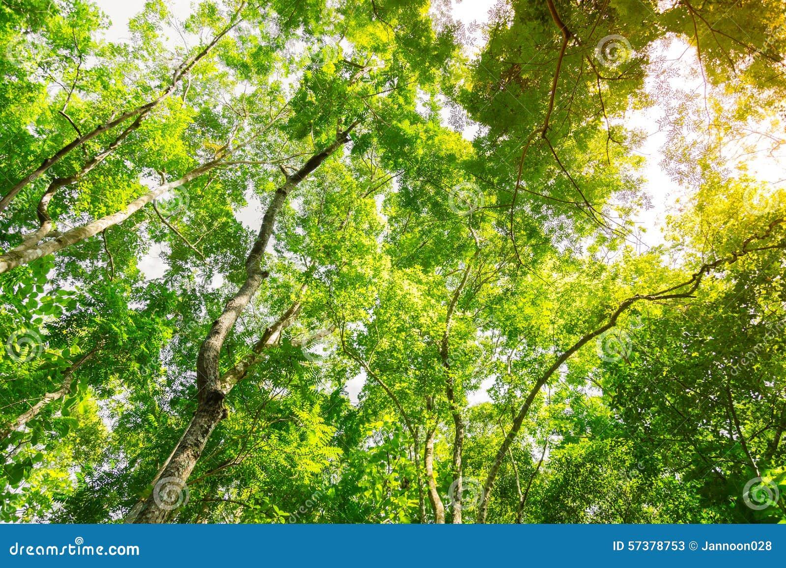 Bos bomen
