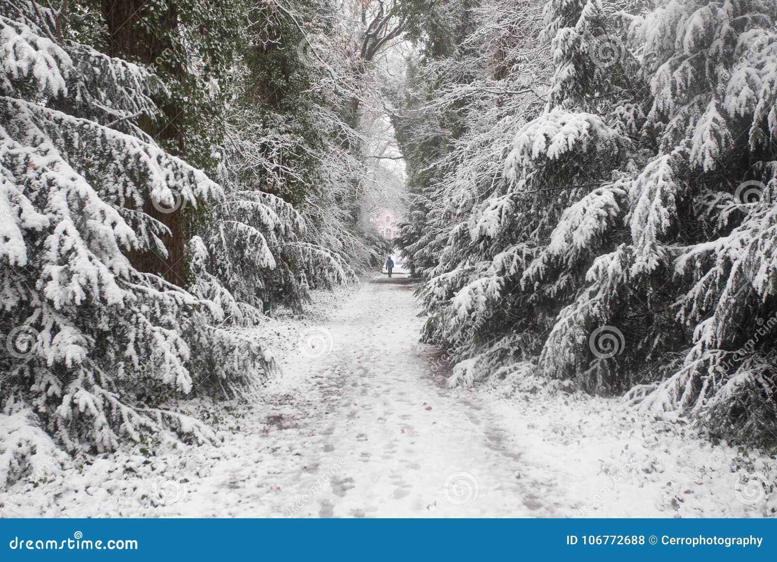 Bos in de winter met witte sneeuw en mensen die op de ijsweg lopen