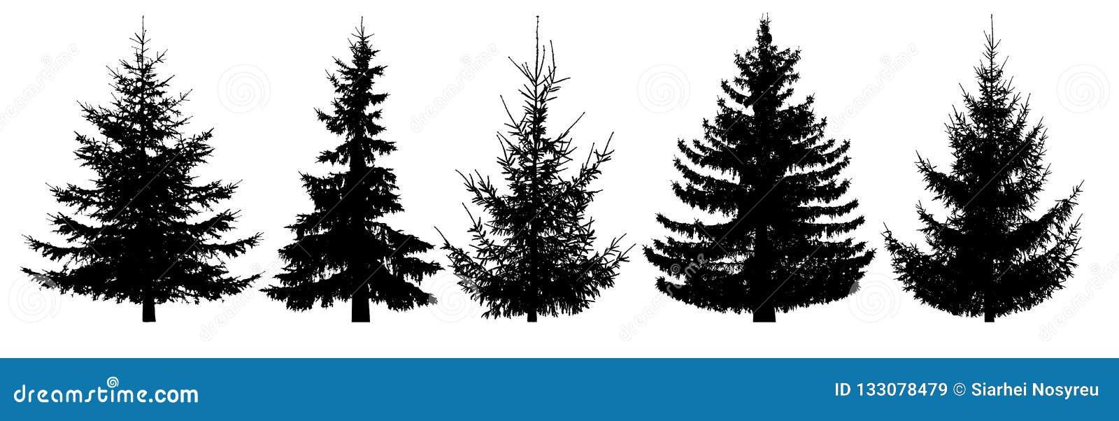 Bos geplaatste bomen Geïsoleerd vectorsilhouet