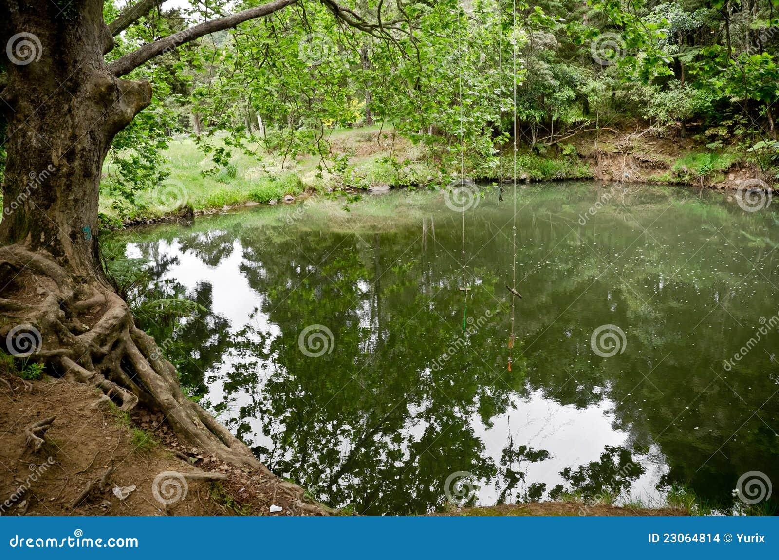 Bos meer stock afbeeldingen beeld 23064814 - Bos lak ...