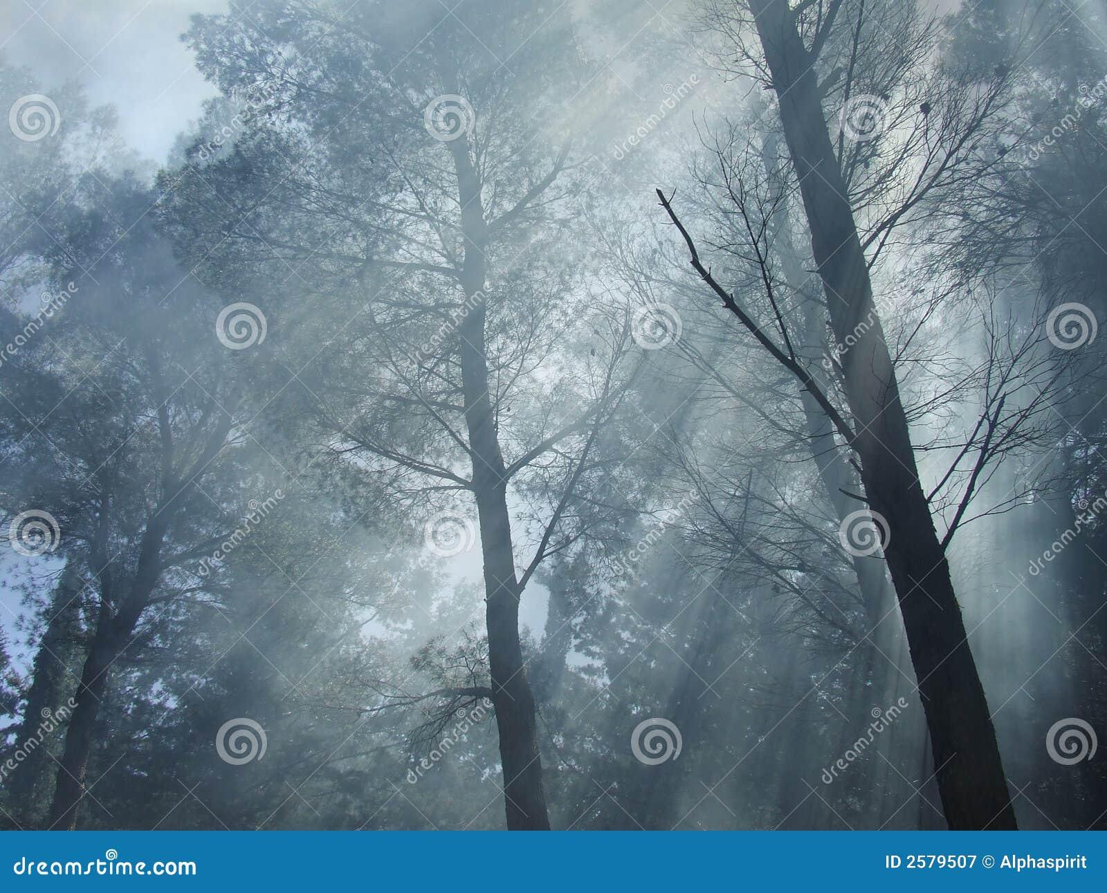 Bos mist