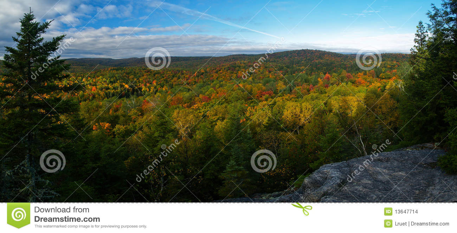 Bos in Quebec