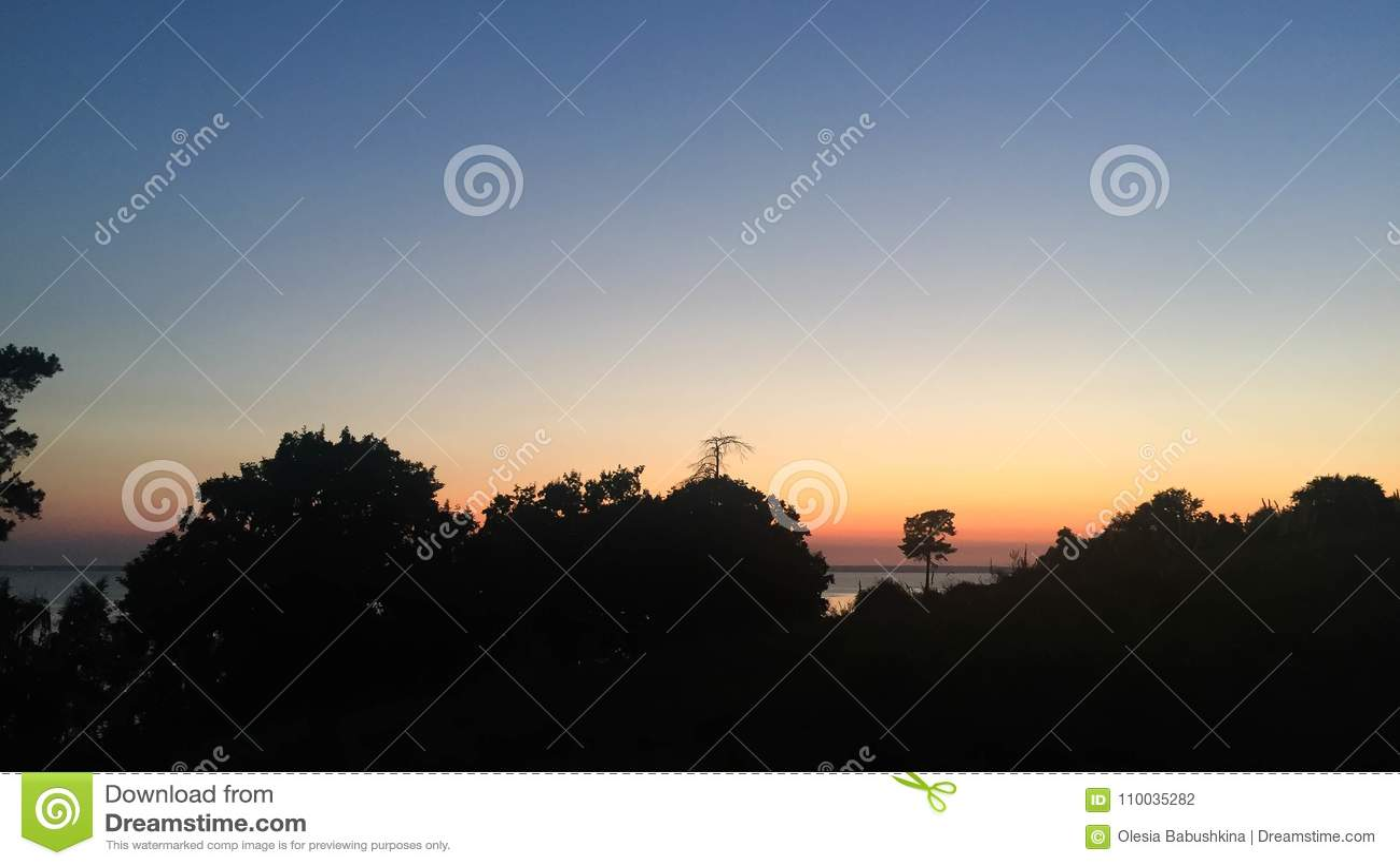 Bos silhouet bij zonsondergang