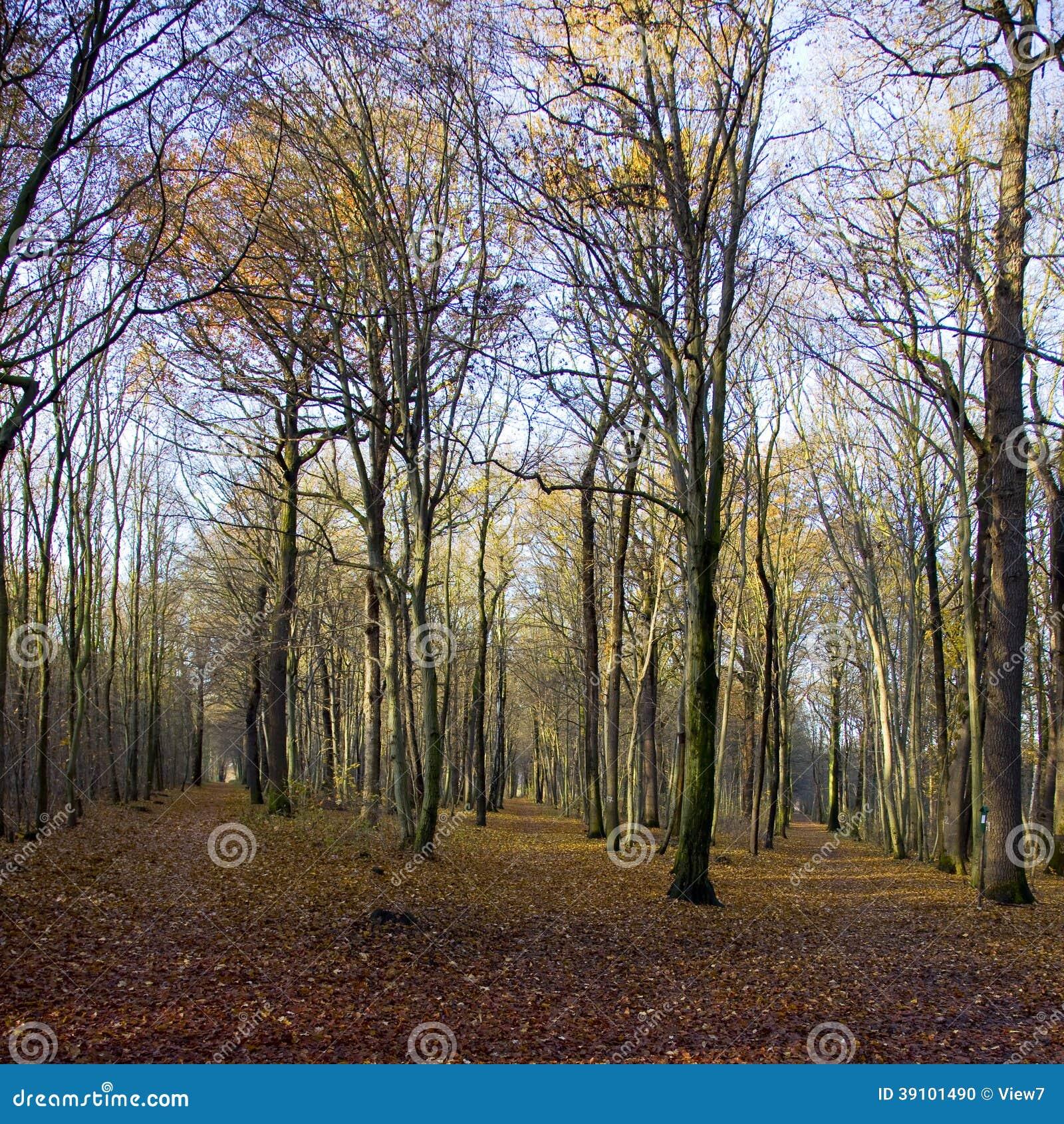 Bos van bomen in de herfst