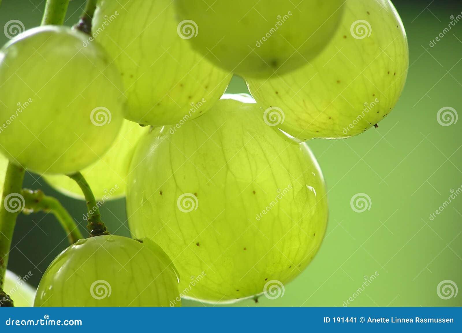 Bos van groene druiven