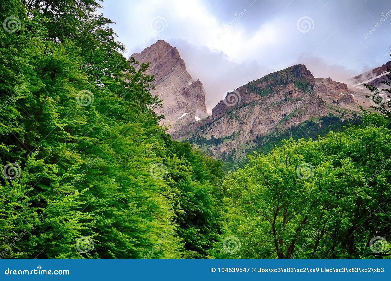 Download Bos Van Hoge Mountaine In Het Nationale Park Van Ordesa In Spanje Stock Afbeelding - Afbeelding bestaande uit ontruim, installatie: 104639547
