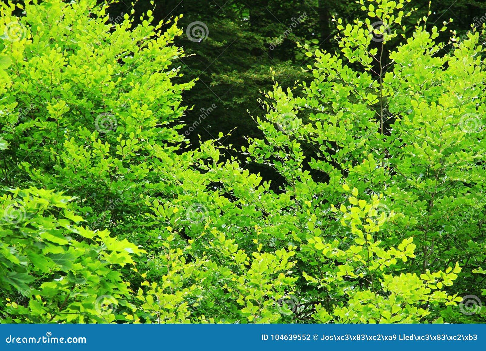 Download Bos Van Hoge Mountaine In Het Nationale Park Van Ordesa In Spanje Stock Foto - Afbeelding bestaande uit tussen, naughty: 104639552