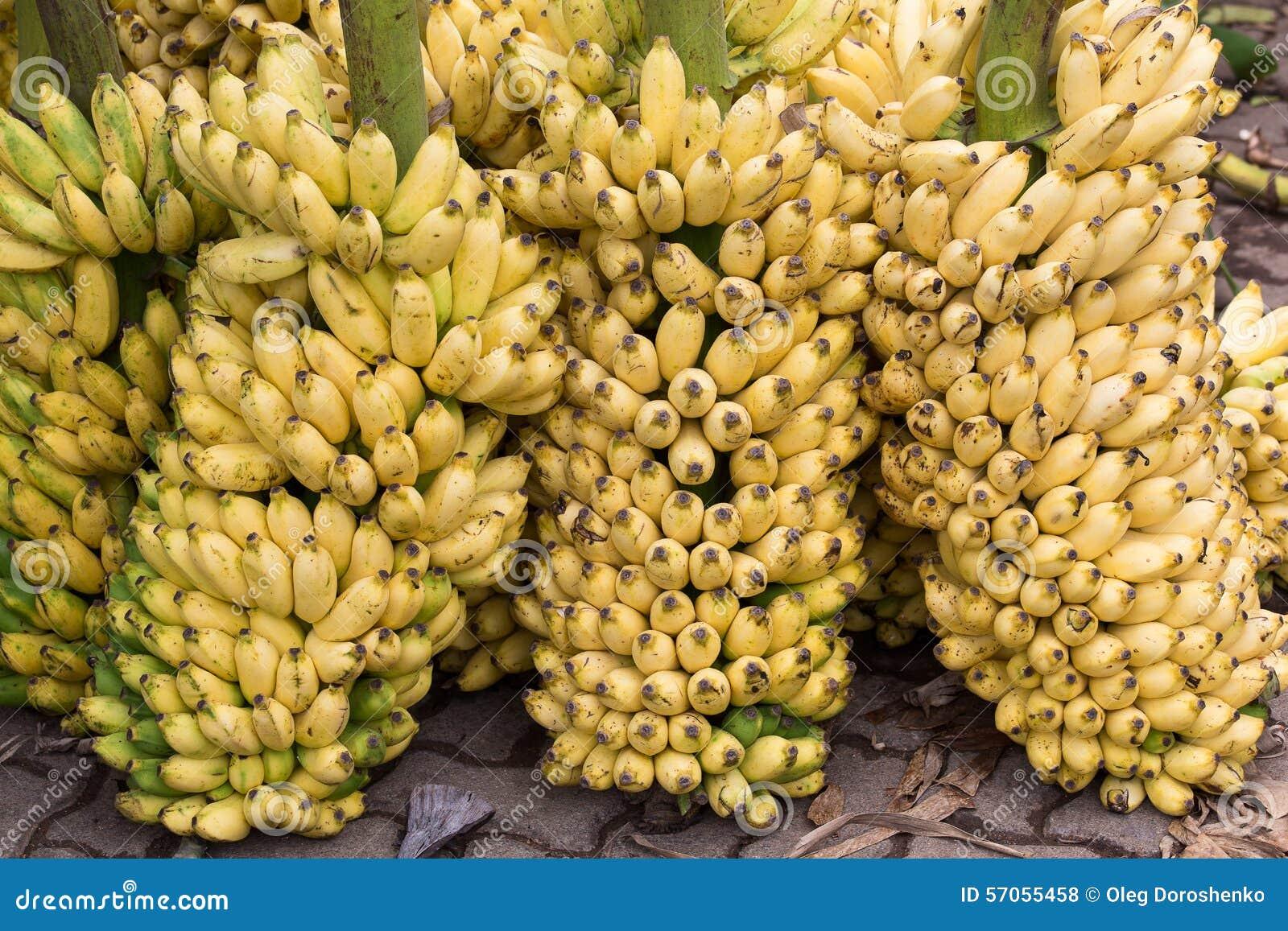 Bos van rijpe bananenachtergrond op de markt