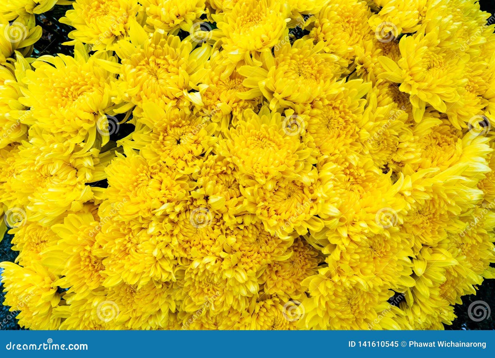 Bos van verse gele die aster of chrysantemumbloemen bij een bloemmarkt worden gevonden in de stad