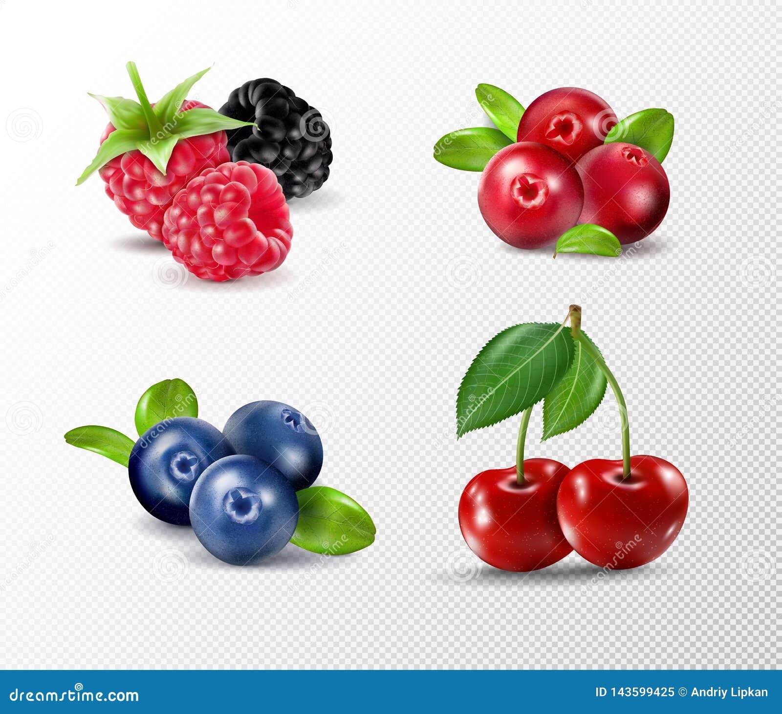 Bosbes Zoet fruit Realistische illustratie 3d vectorpictogramreeks