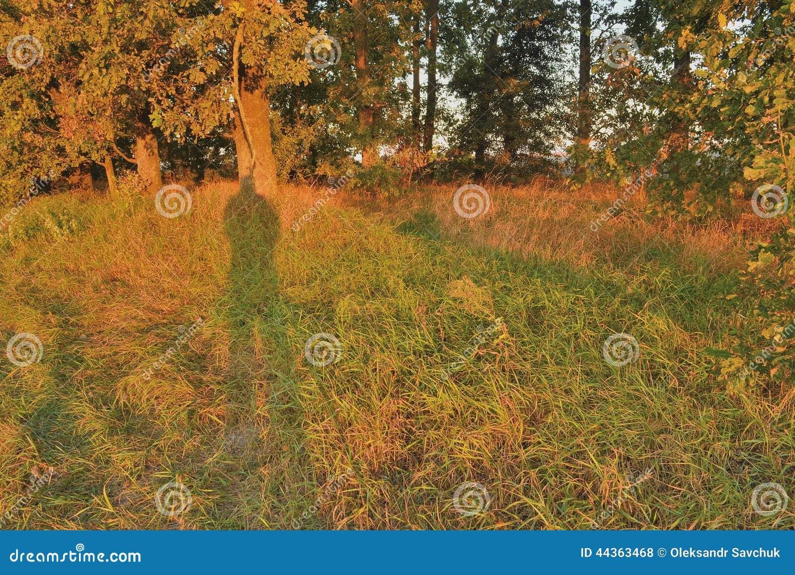 Boschetto della quercia nei raggi dell alba