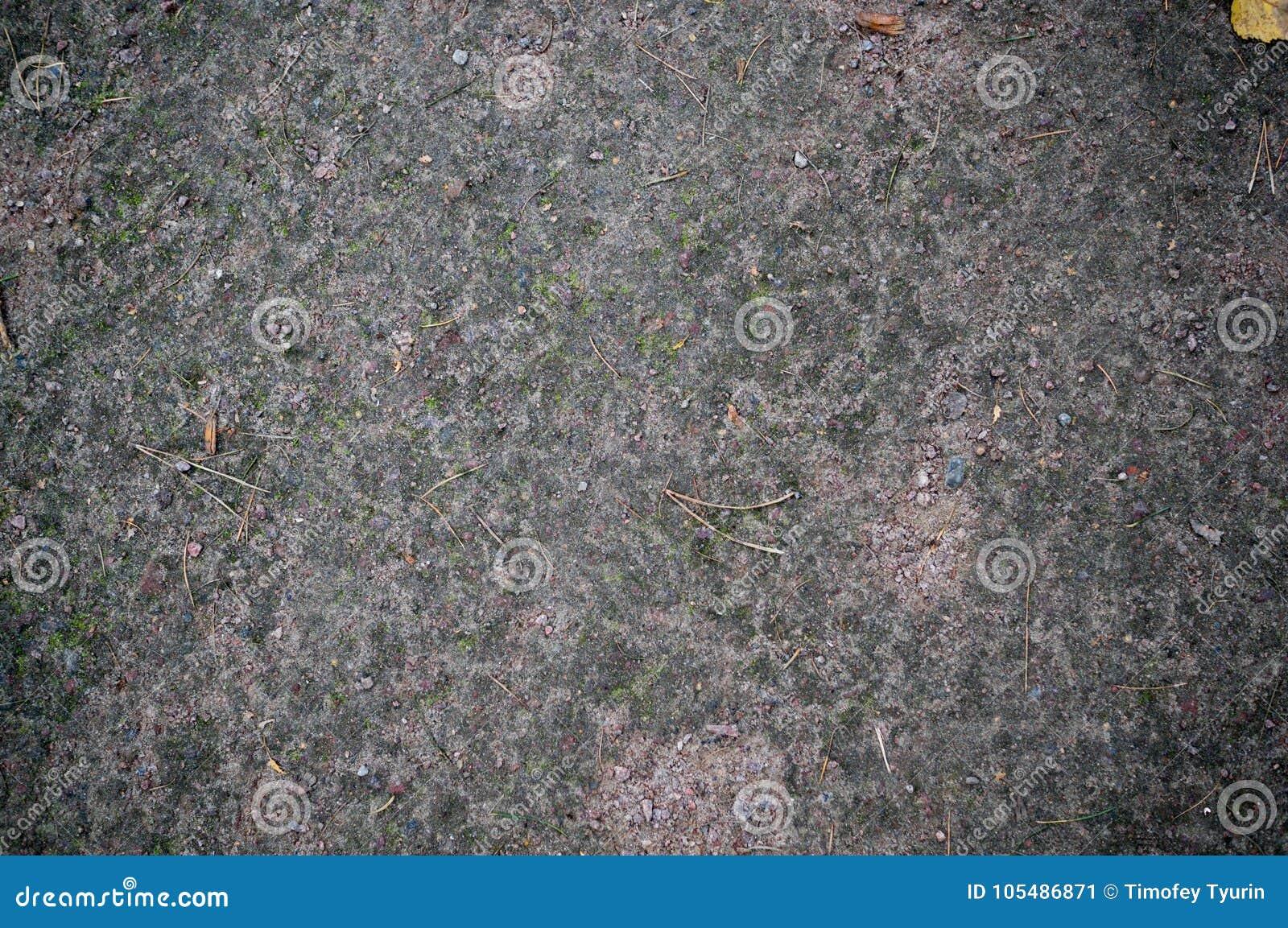 Bosgrondtextuur met mos Achtergrond
