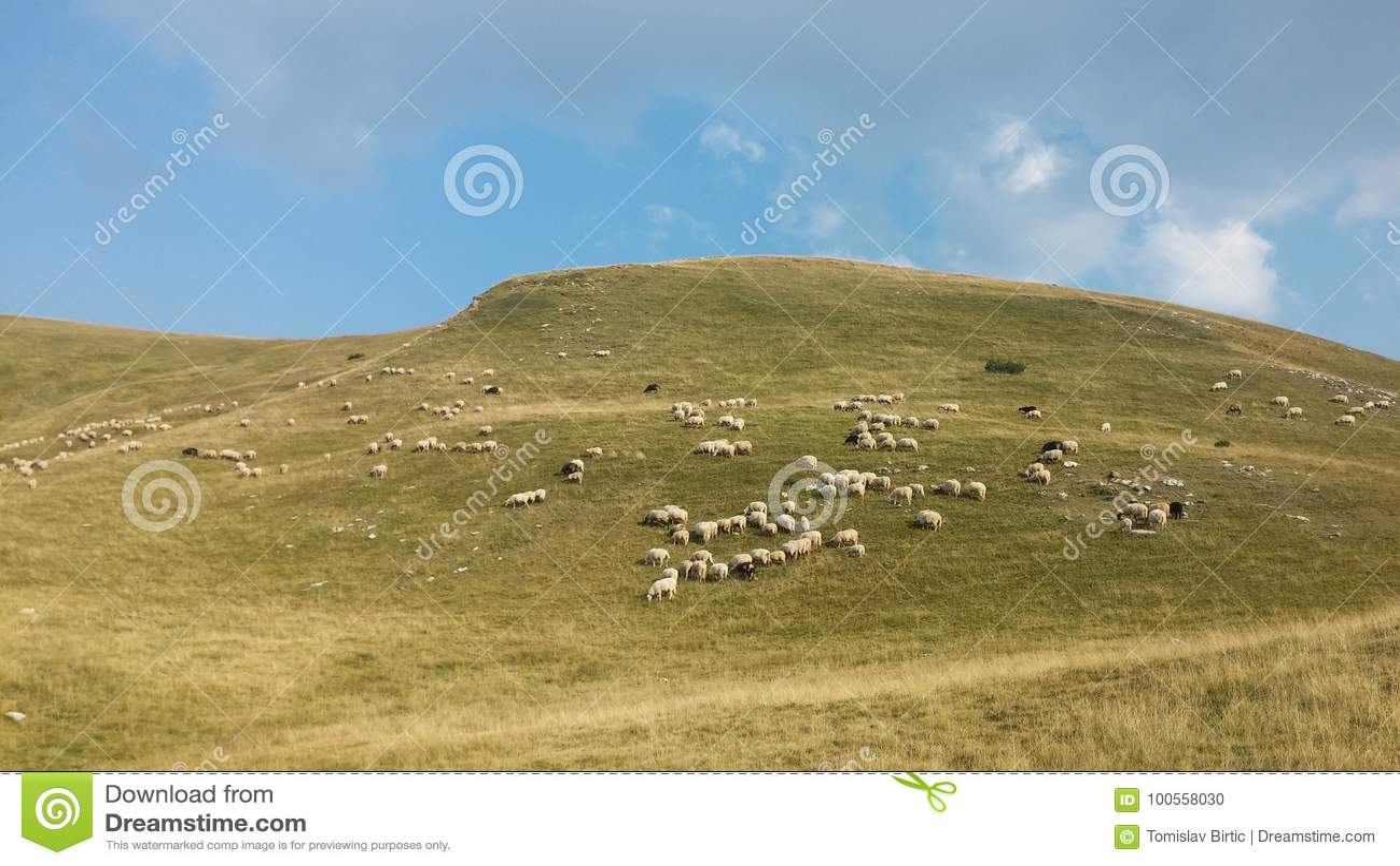 Bosnië-Herzegovina/Sheeps doorbladeren in de Berg