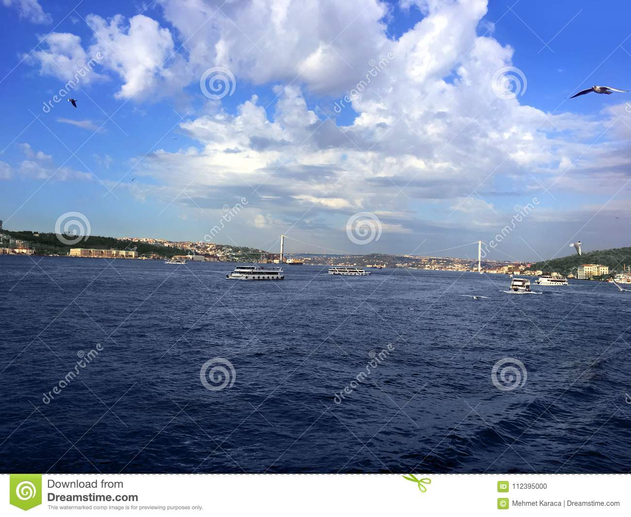 Bosphorus Bridge flying seagulls and steamboats