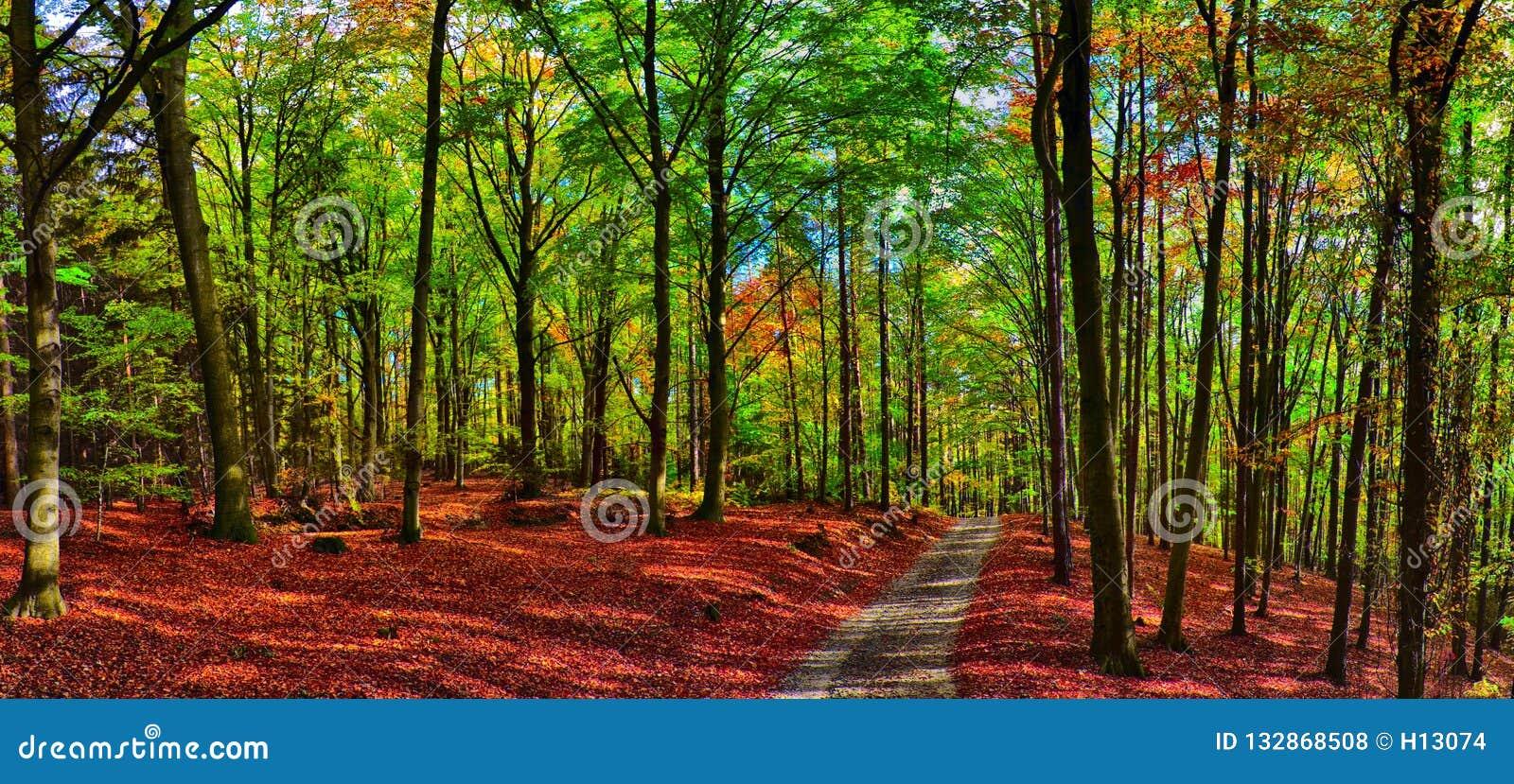 Bosque/arbolado de los árboles de haya con el camino de la grava en la luz del día de la tarde del otoño
