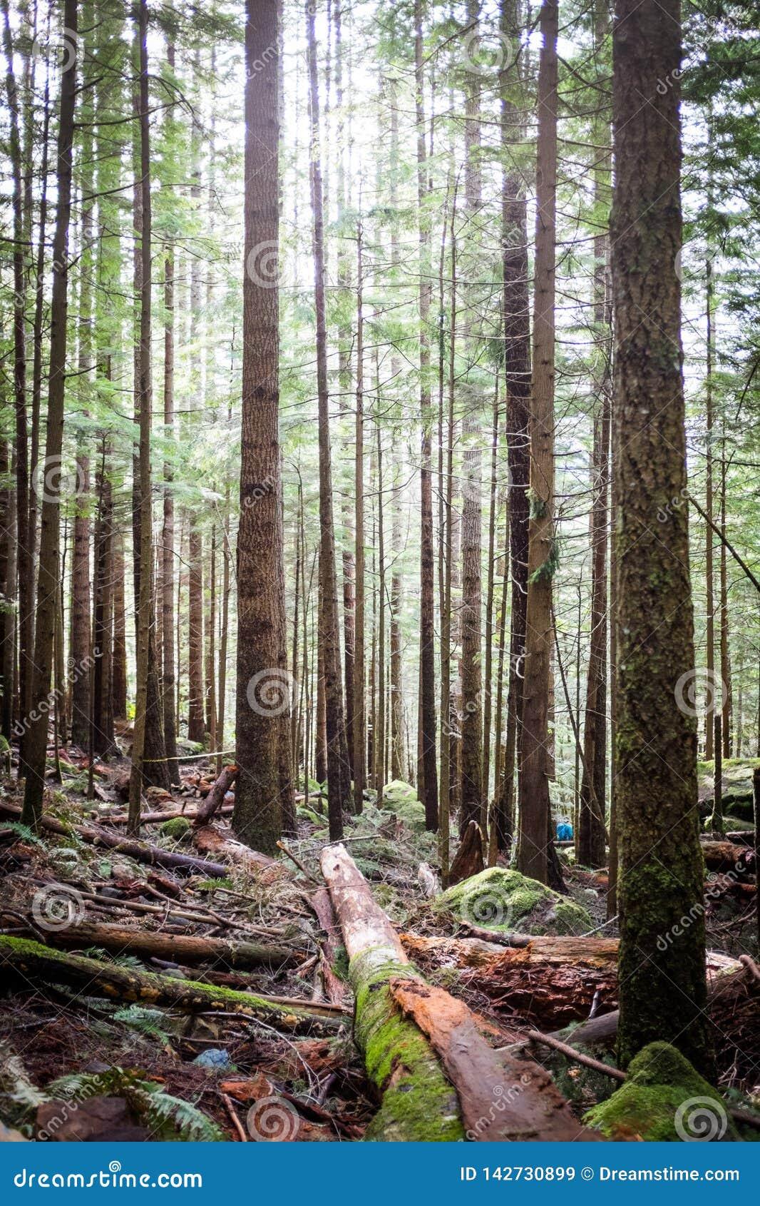 Bosque cerca de Seattle