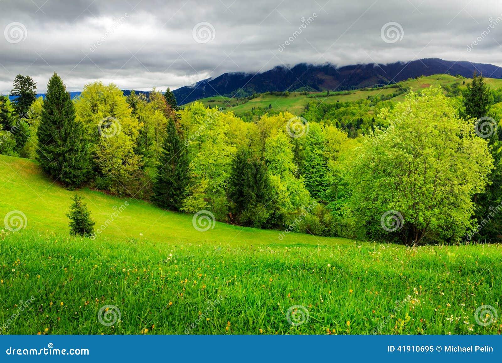 Bosque cerca del prado en montañas