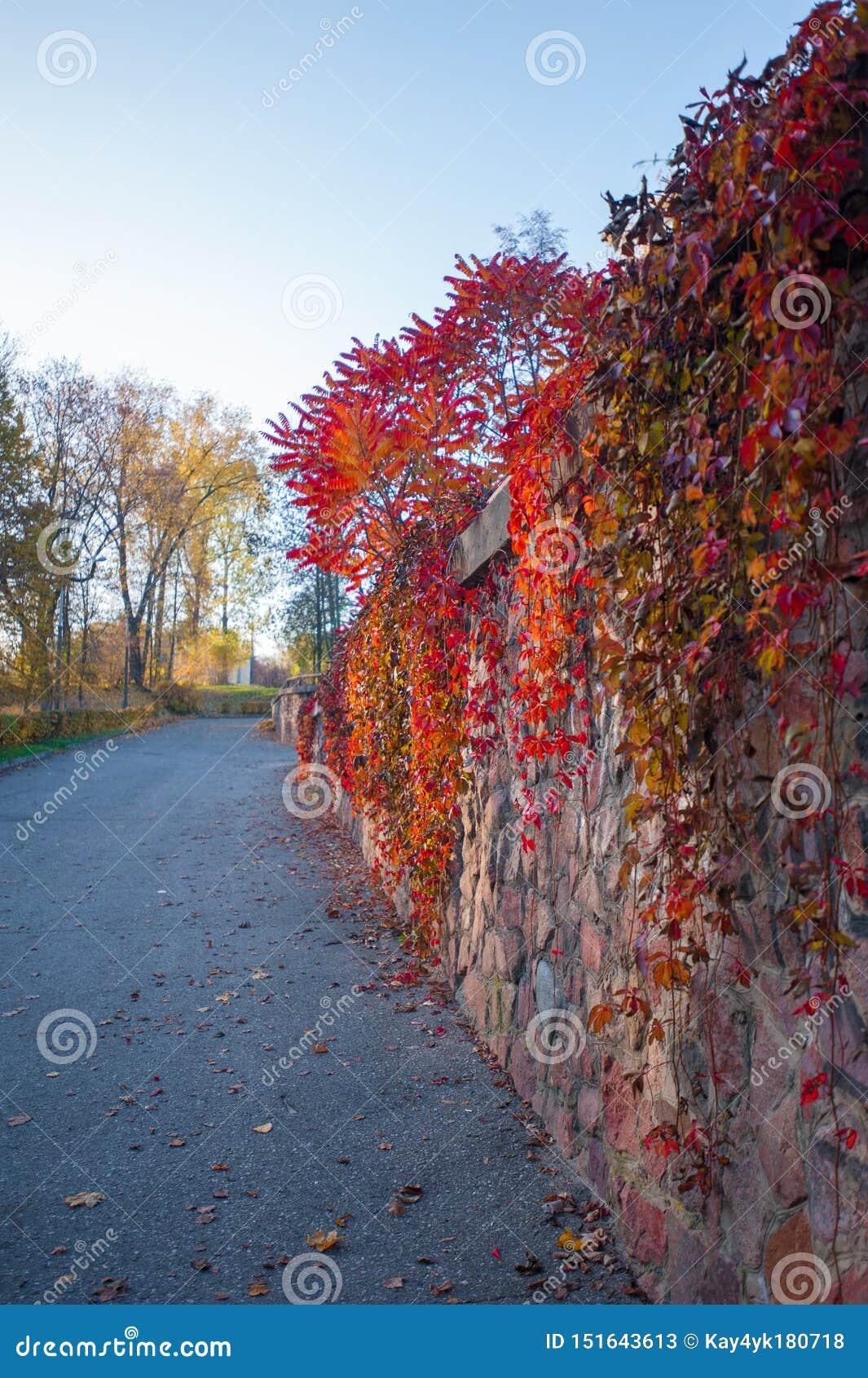 Bosque colorido del otoño en caída del desierto de Ozark Mountain de Arkansas Los árboles vienen vivo con color como las estacion