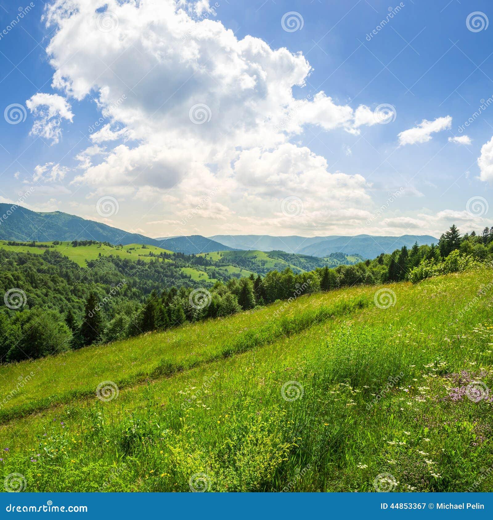 Bosque conífero en una cuesta de montaña