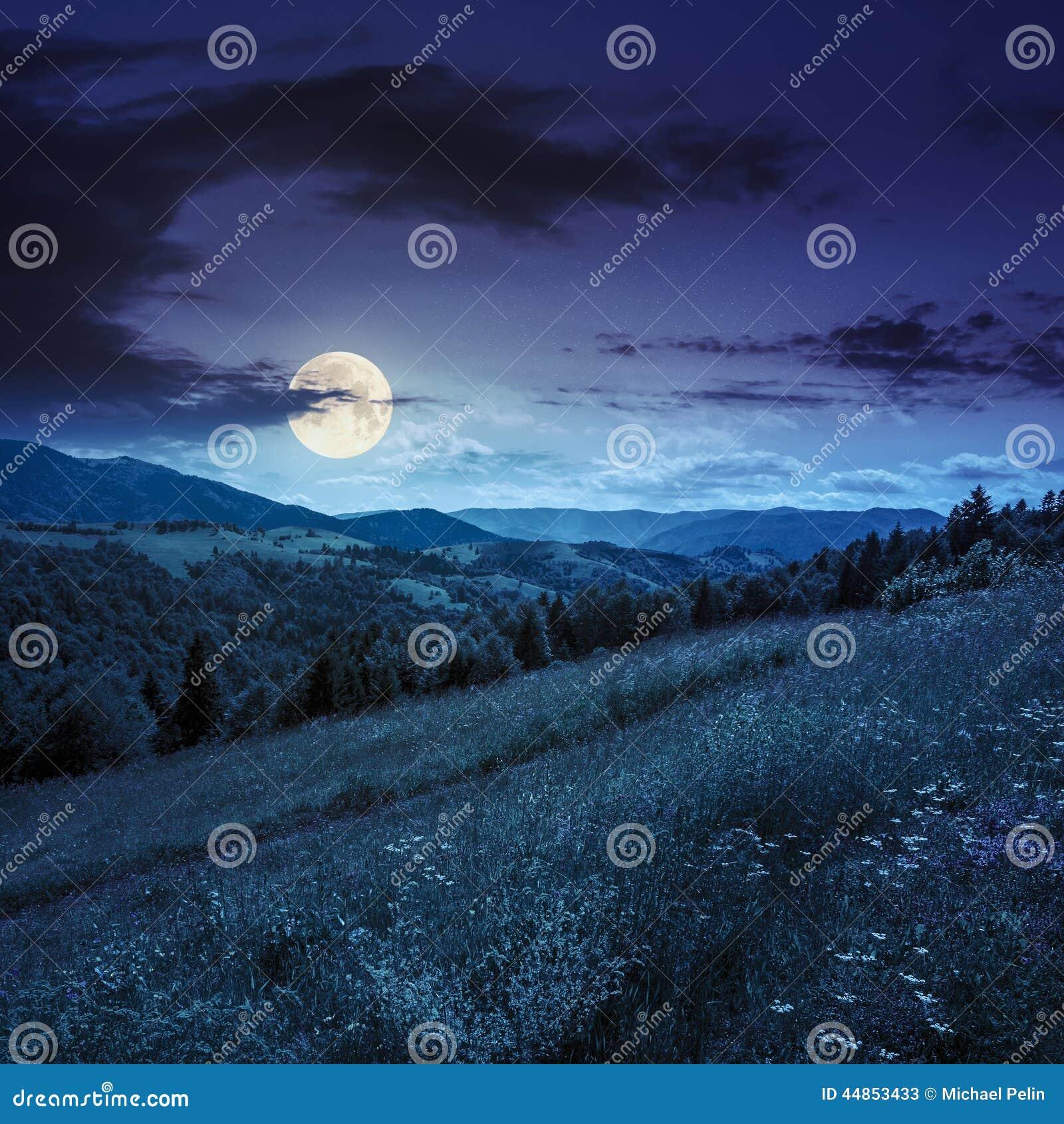 Bosque conífero en una cuesta de montaña en la noche