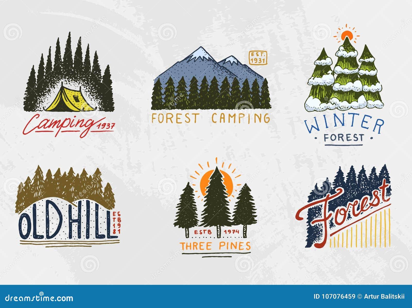 Bosque Conífero, Montañas Y Logotipo De Madera El Acampar Y ...