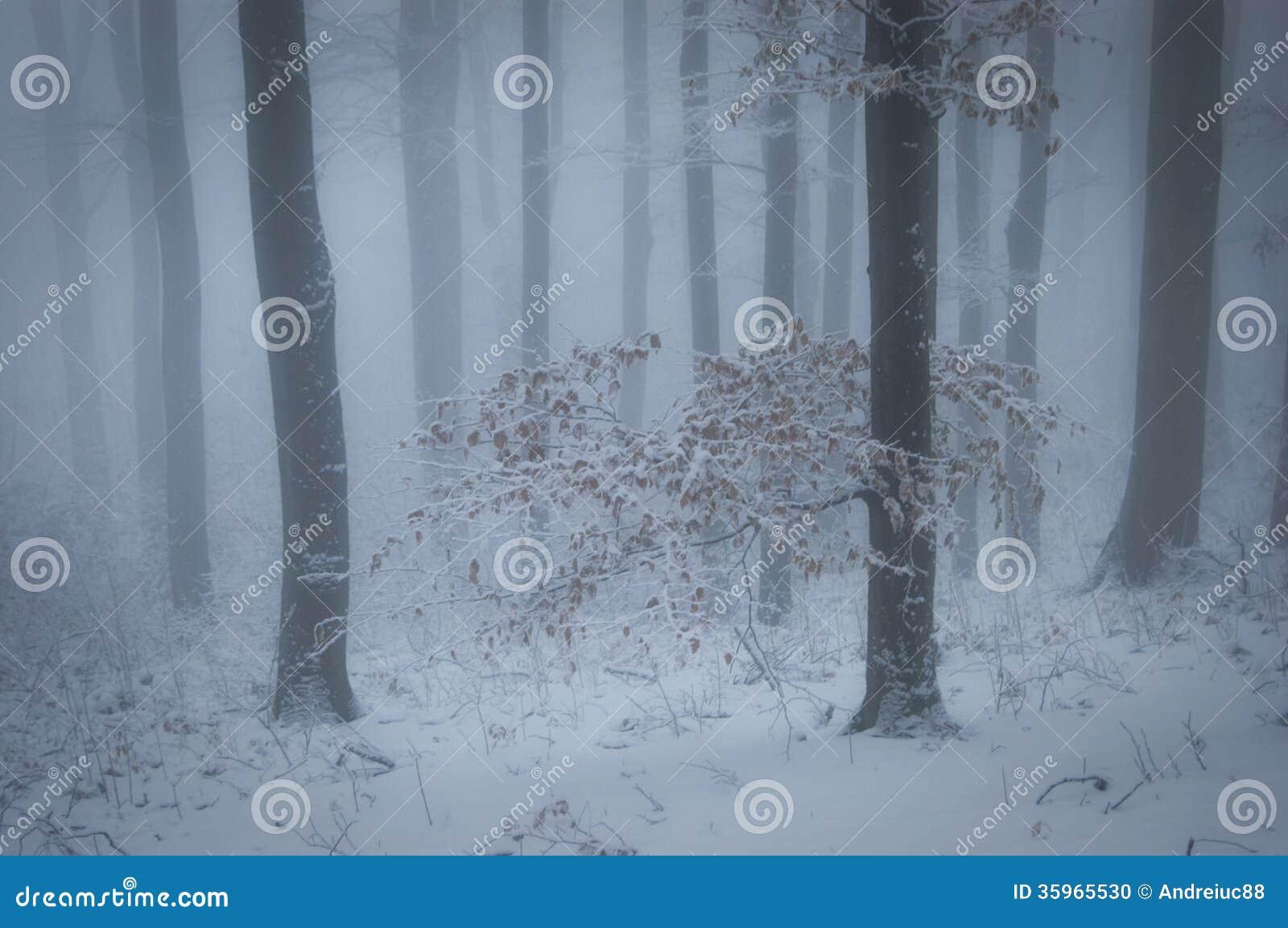 Bosque con niebla y nieve en invierno