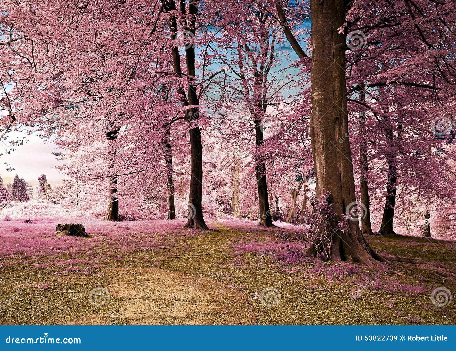 Bosque da floresta