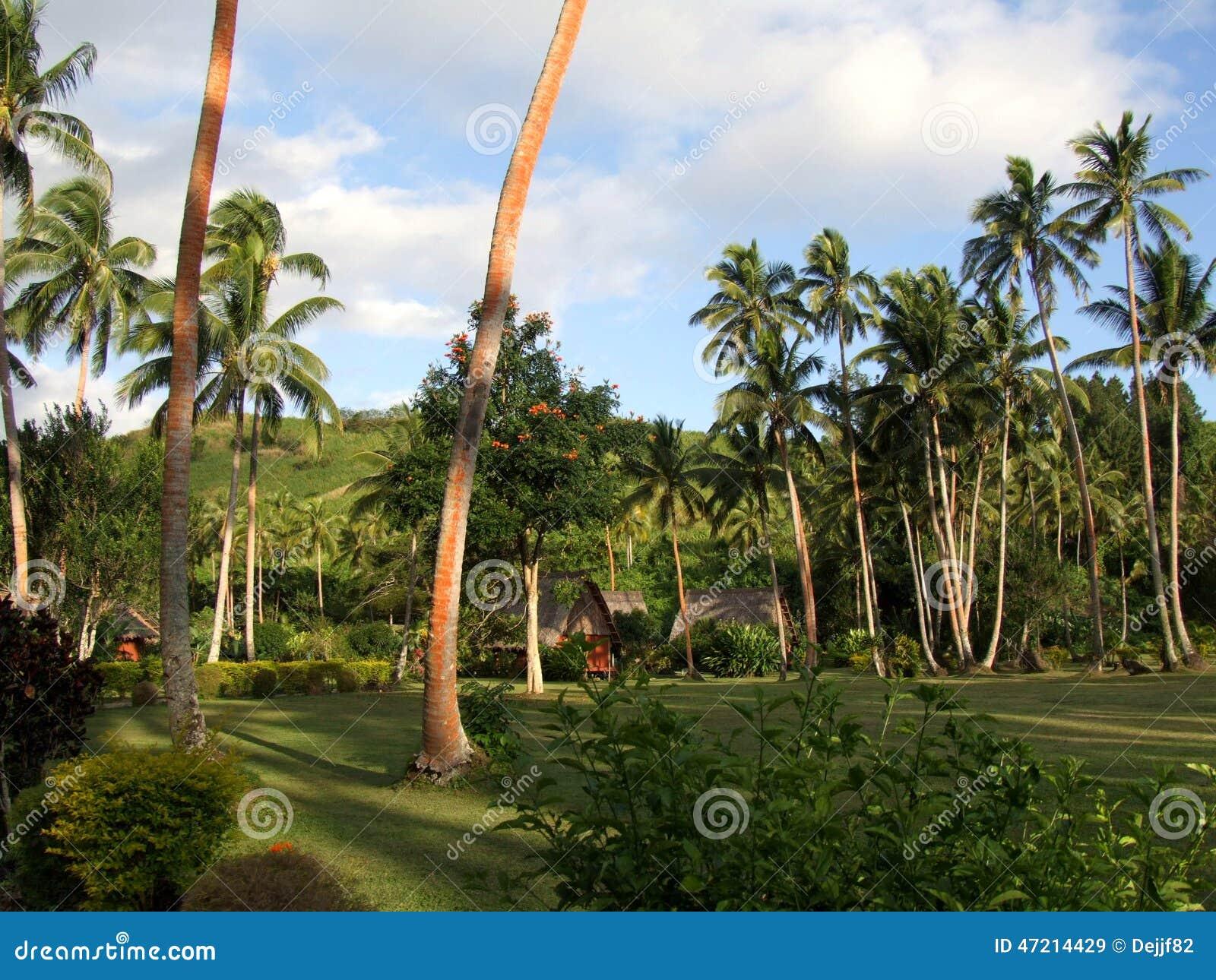 Bosque da palma