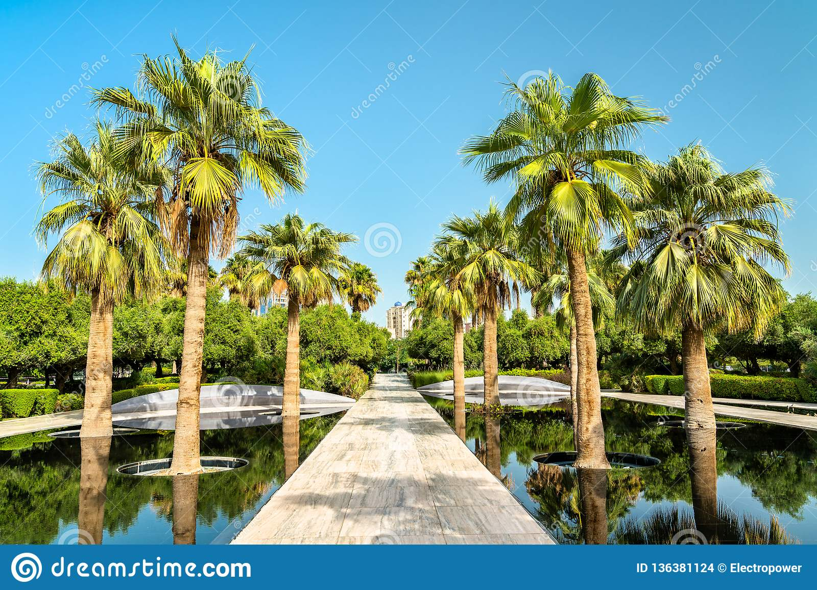 Bosque da palma em Al Shaheed Park, a Cidade do Kuwait