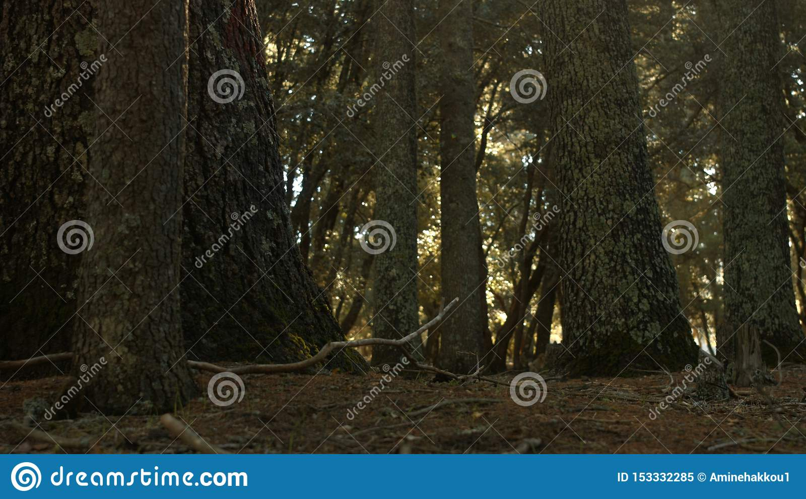 Bosque de Azrou en atlas marroquí