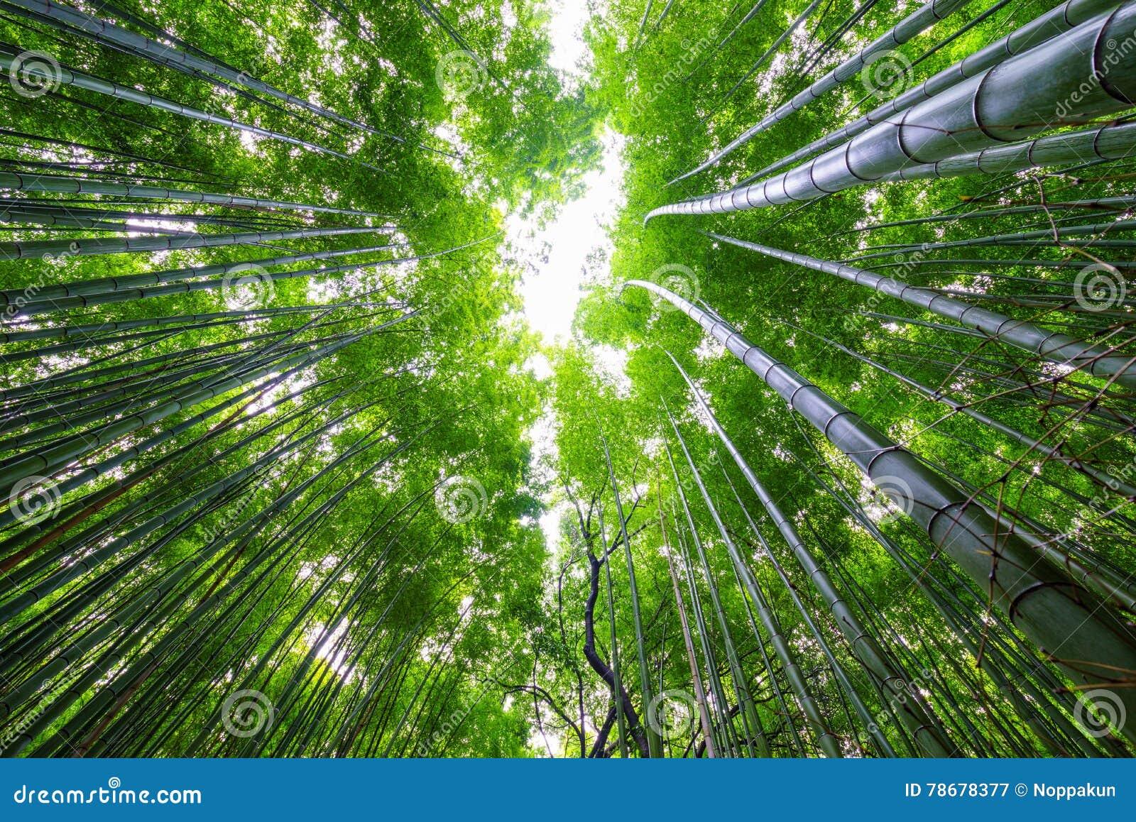 Bosque de bambú, Arashiyama, Kyoto, Japón