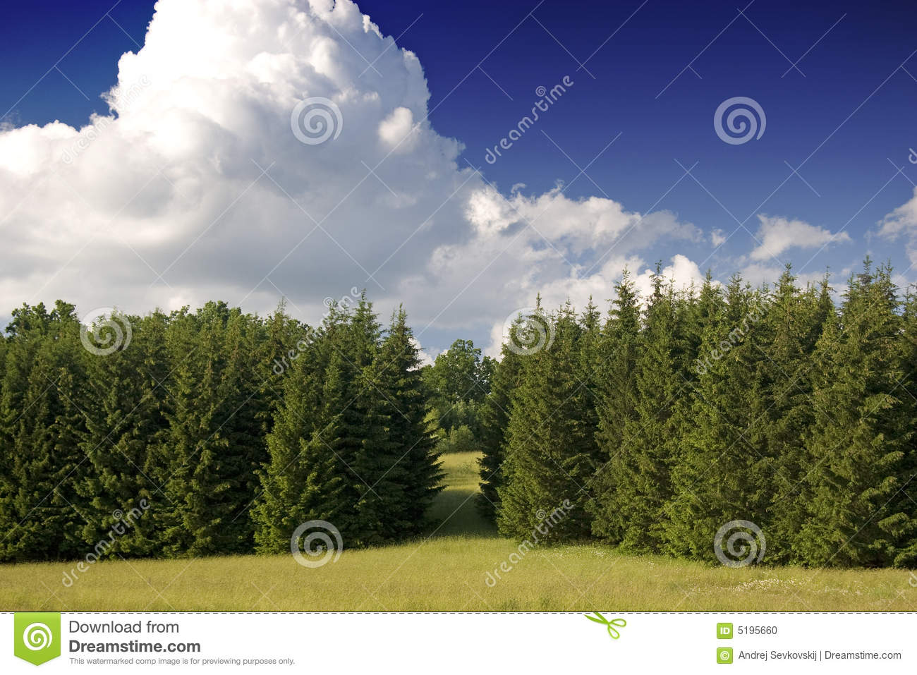 Bosque de Europa occidental