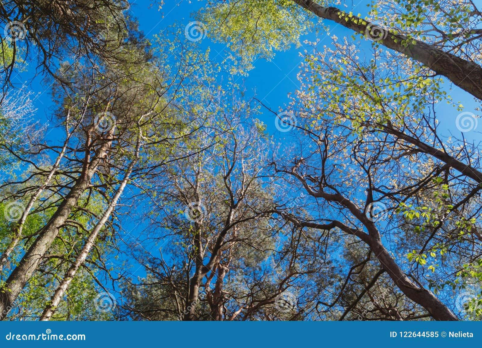 Bosque de la naturaleza, árboles que crecen hacia arriba al sol