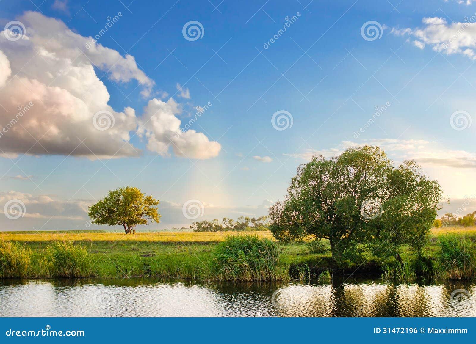 Bosque de la naturaleza del paisaje del árbol del verano del cielo del río