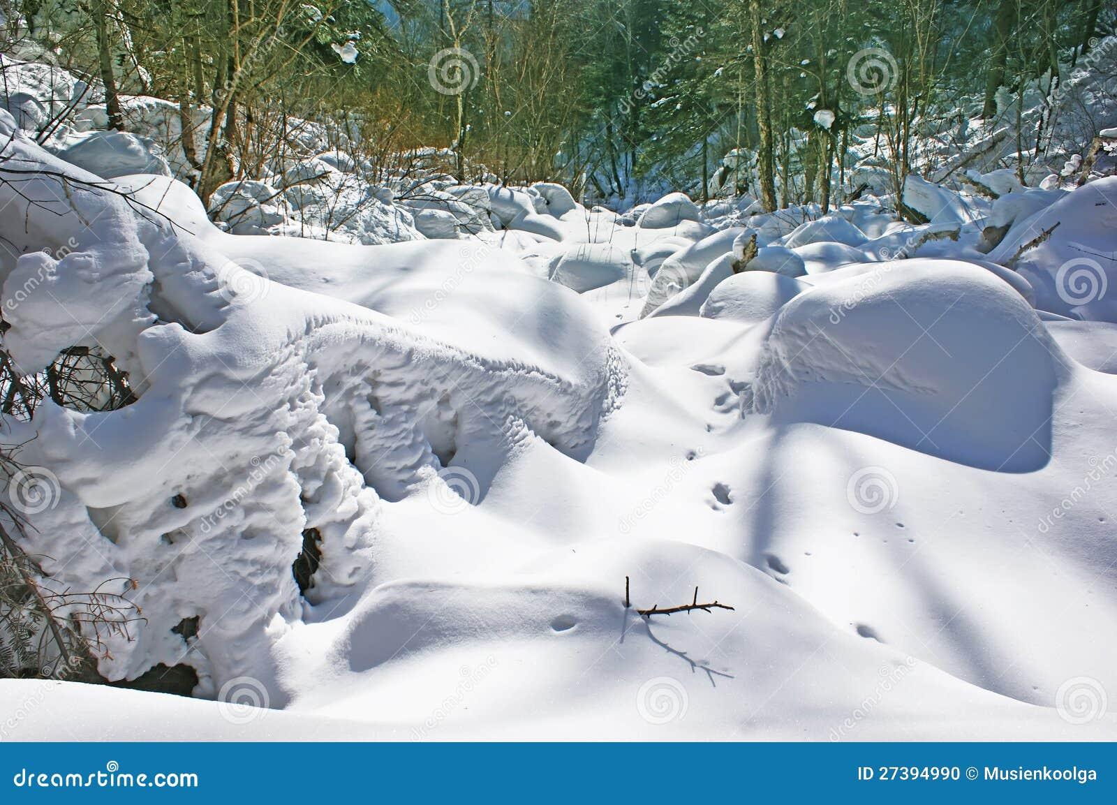 Bosque de la nieve.