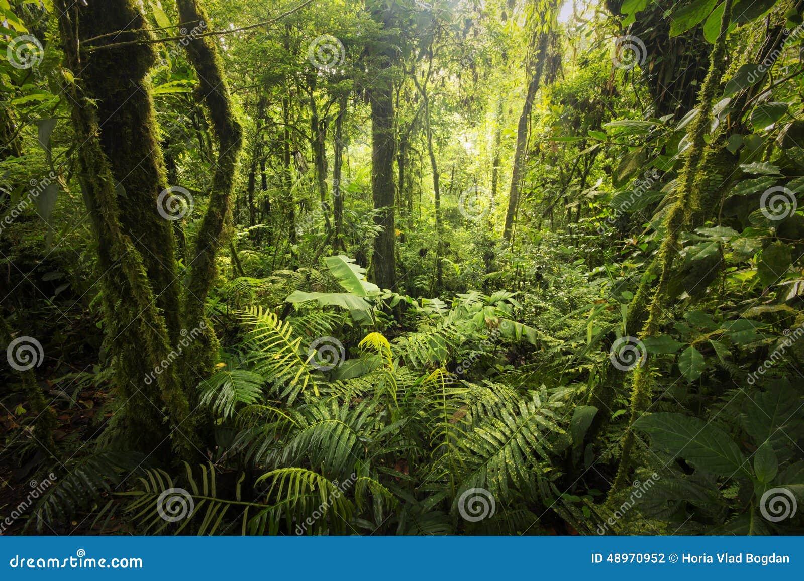 Bosque de la nube de Costa Rica