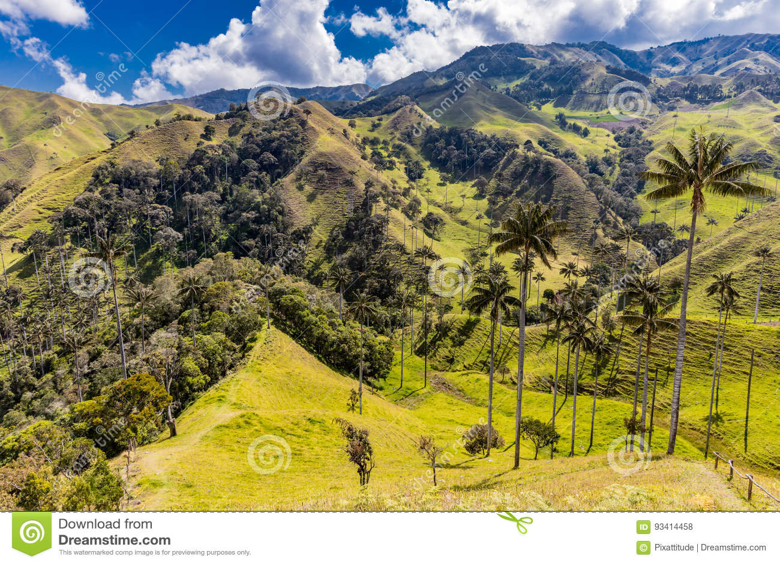 Bosque De Palma De Cera losu angeles Samaria San Felix Salamina Caldas Col