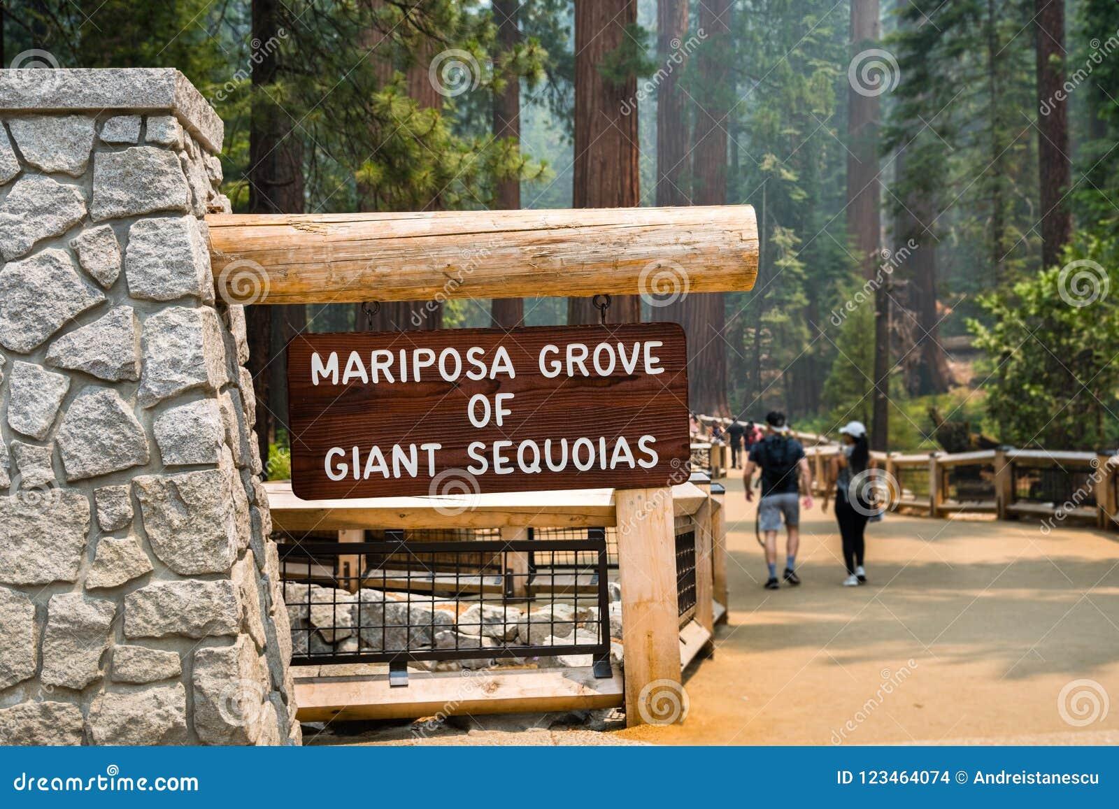 Bosque de sequoias gigantes, parque nacional de Mariposa de Yosemite