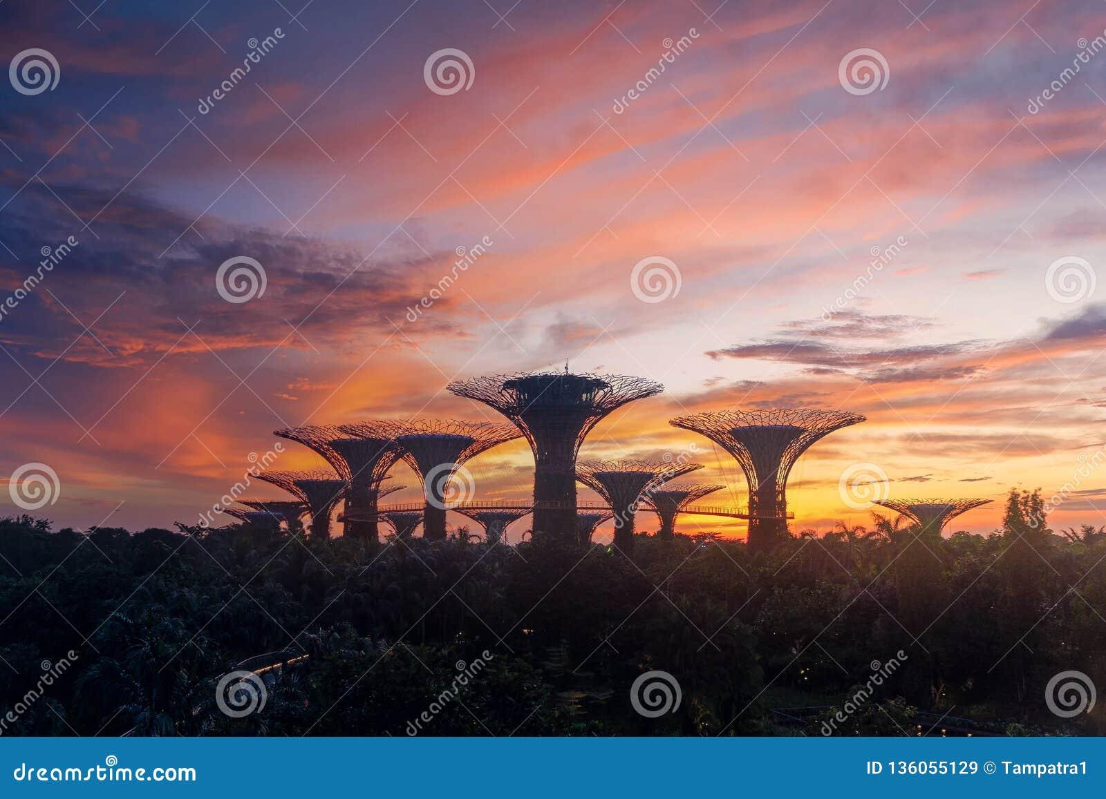 Bosque de Supertree Jardim pela baía na área de Marina Bay no nascer do sol na cidade de Singapura