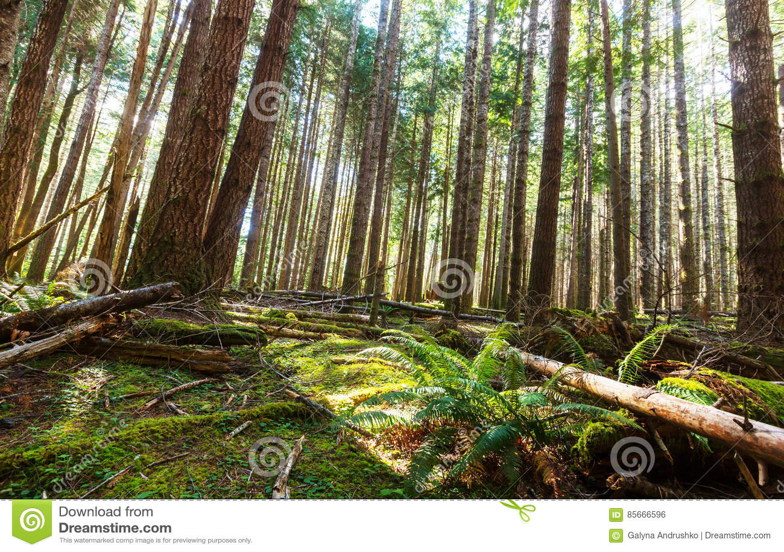 Bosque de Vancouver