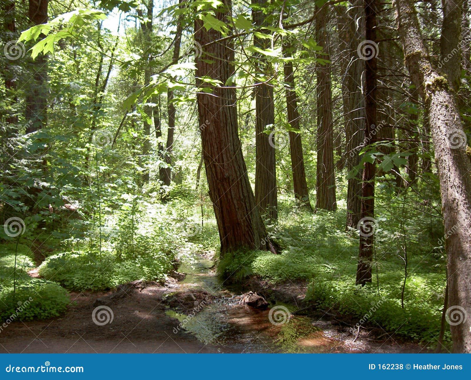 Bosque de Yosemite