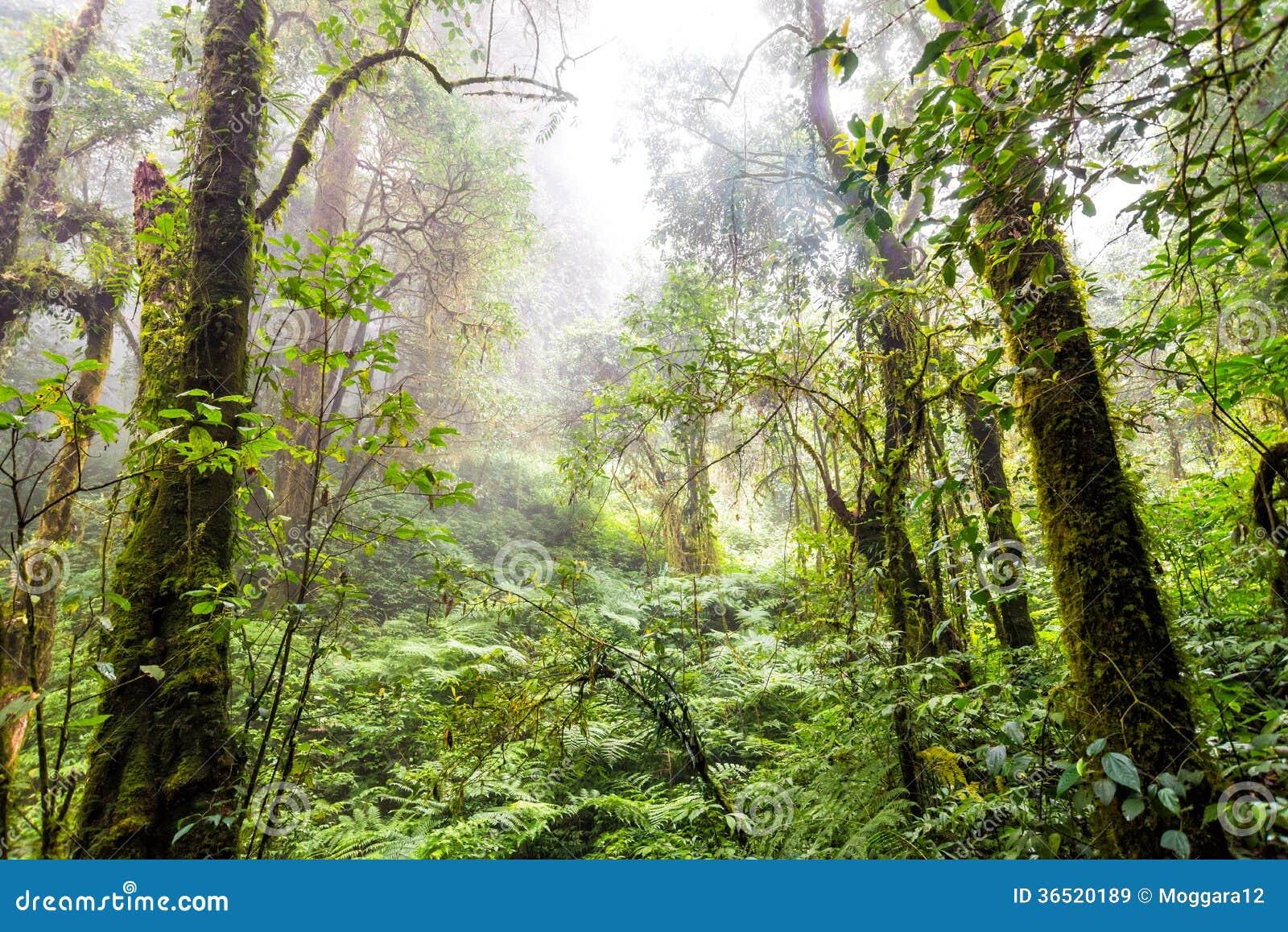 Bosque del árbol en la estación del otoño de Tailandia