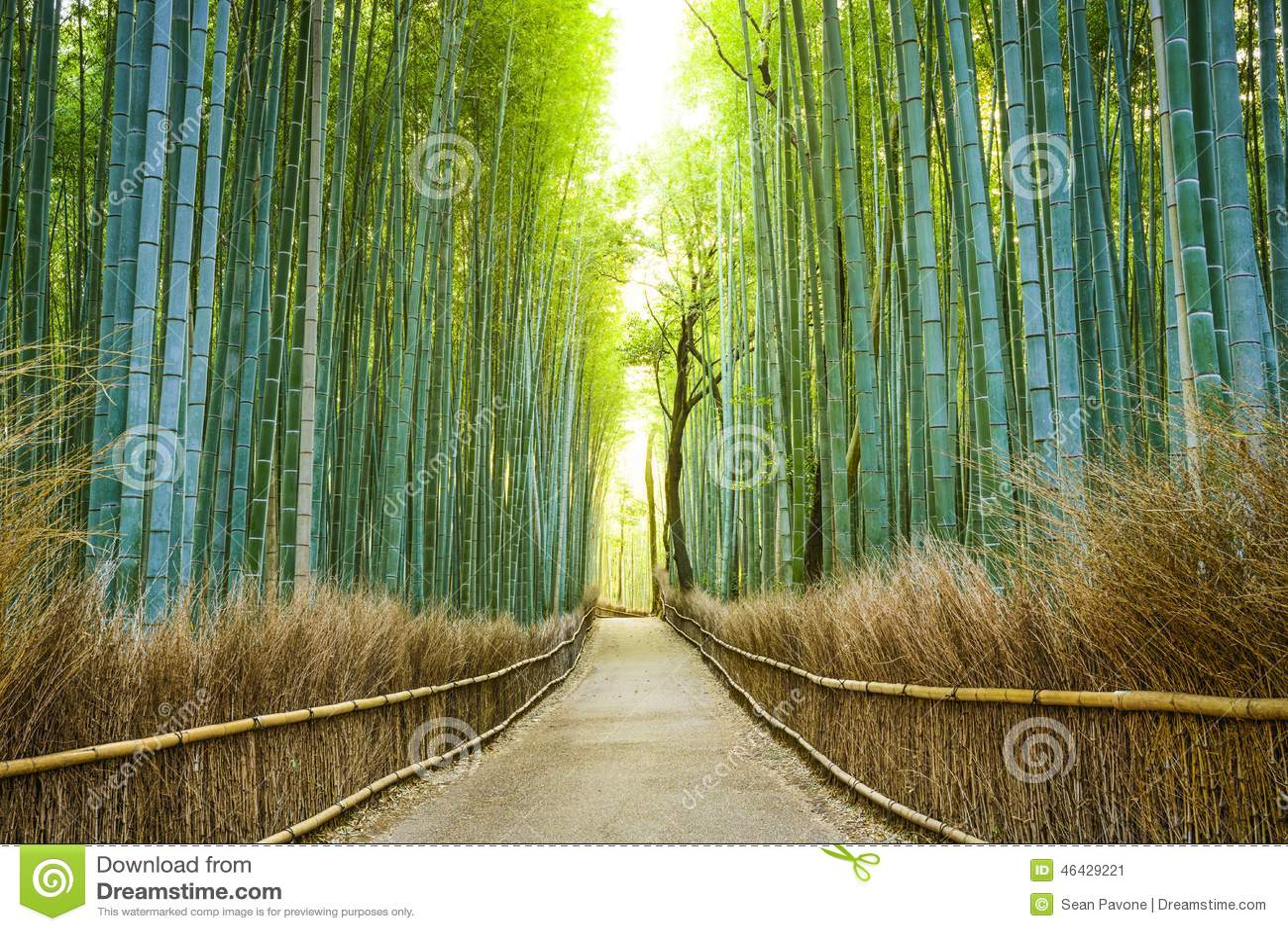 Bosque del bambú de Kyoto, Japón