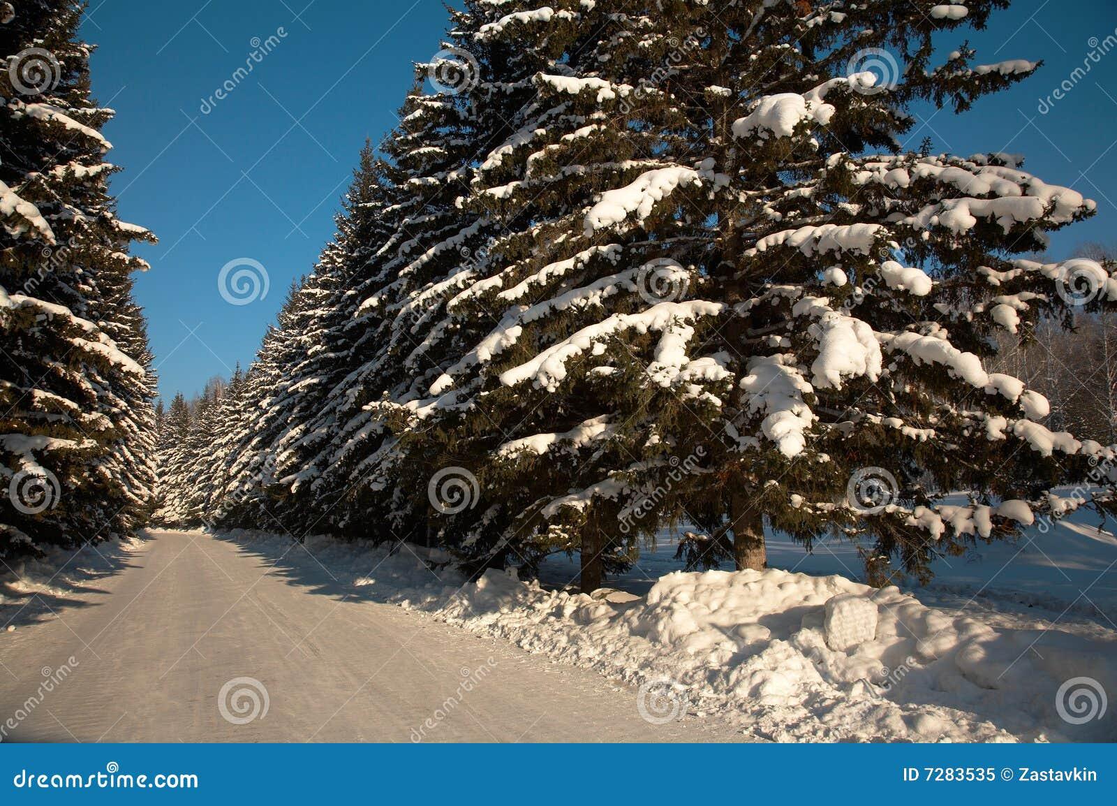 Bosque del canal de la manera del invierno