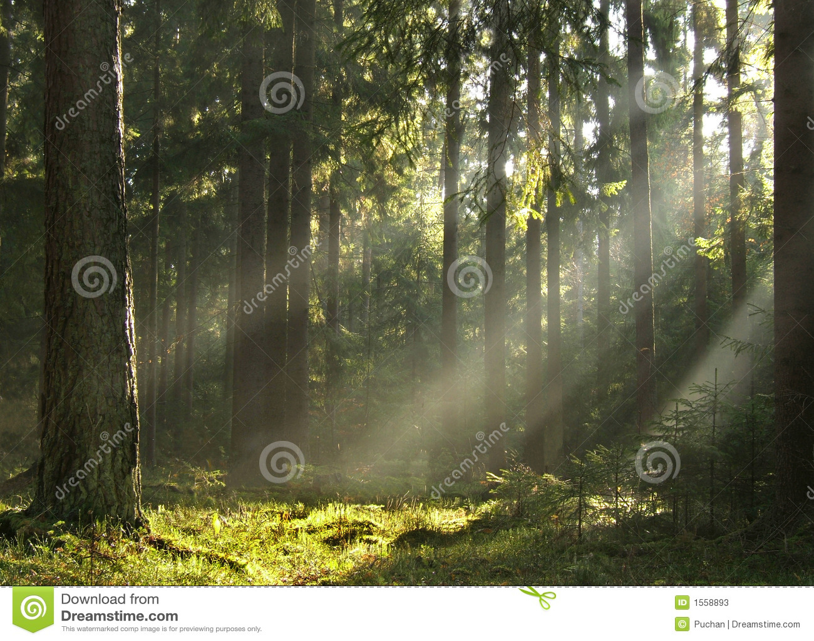 Bosque del ib de los haces luminosos