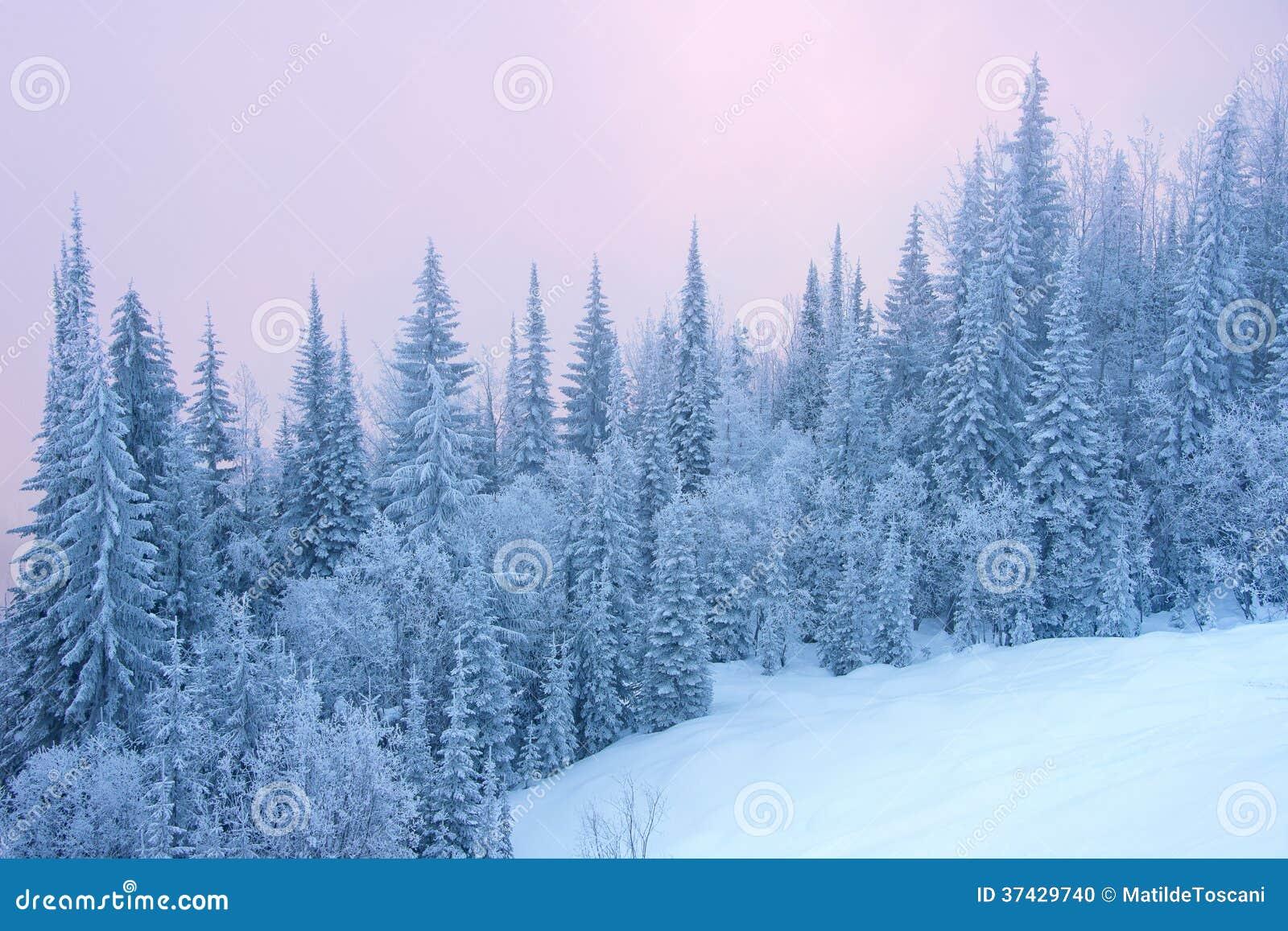 Bosque del invierno
