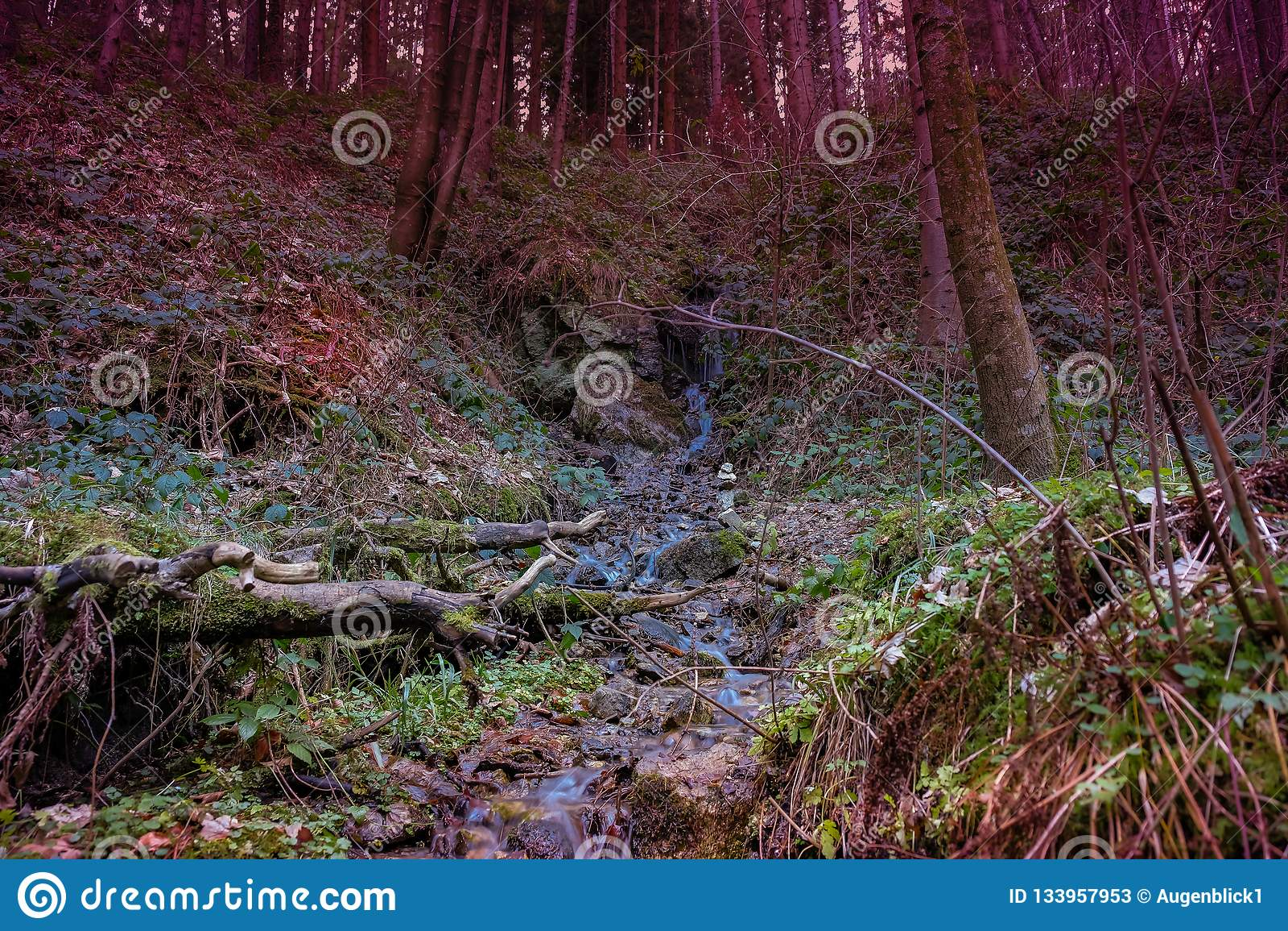 Bosque del misterio por la tarde