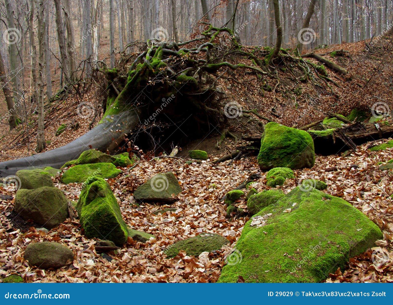 Download Bosque del otoño imagen de archivo. Imagen de hoja, weekend - 29029