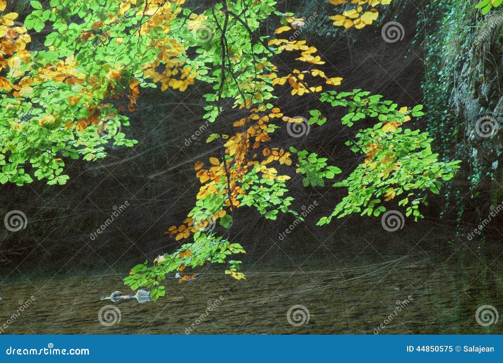 Bosque del otoño del vintage